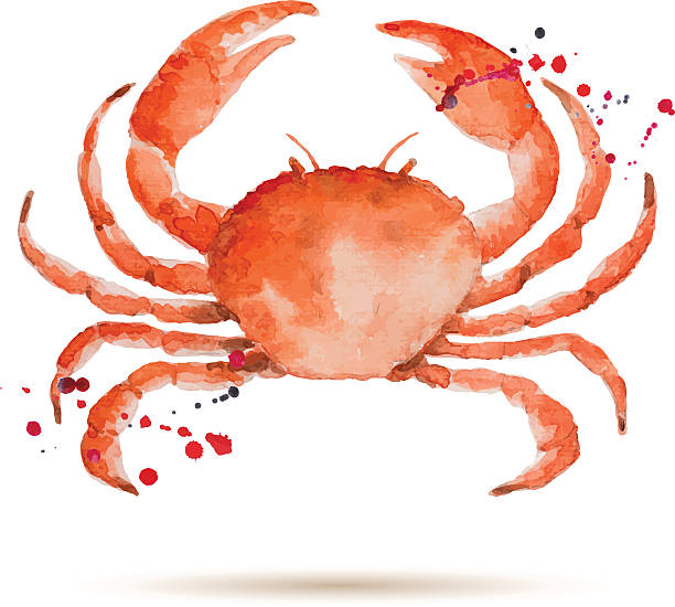 stockillustraties, clipart, cartoons en iconen met watercolorcrab - krab gerecht