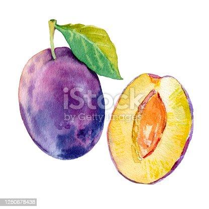 istock Watercolour vector ripe plum fruit illustration. Hand drawn plum. Fresh juicy fruit. Bright illustration. Watercolor floral botanical painting 1250678438