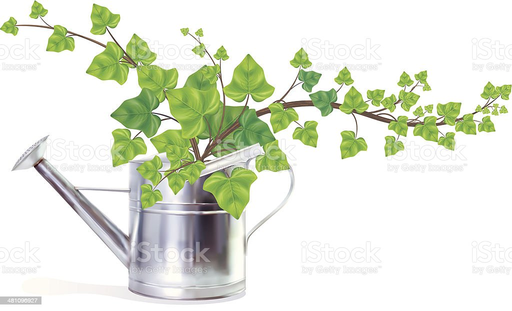 Watering Can Filled With English Ivy vector art illustration
