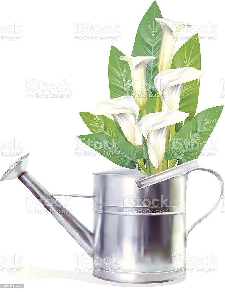 Watering Can With Calla Lilies vector art illustration