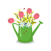 Watering can with with flowers-tulips, Mimosa. Isolated on a white background. The stock graphics.