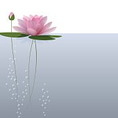 Waterlily on the water. Vector illustration for invitation, menu, banner