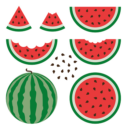 Watermelon signs vector set on white background.