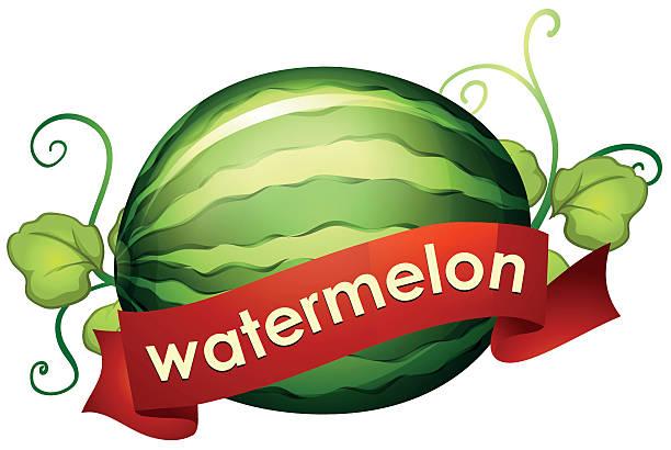 Top 60 Watermelon Vine Clip Art, Vector Graphics and ...