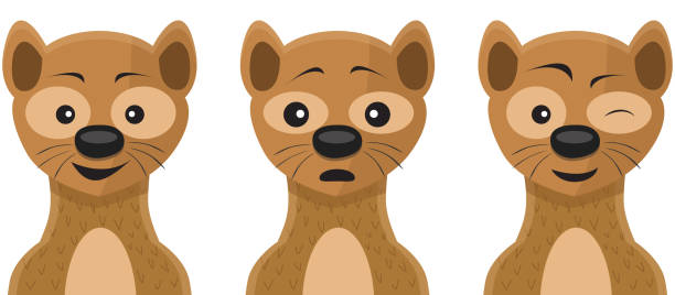 Weasel Face Expressions Weasel Face Expressions Illustration for Kids ermine stock illustrations