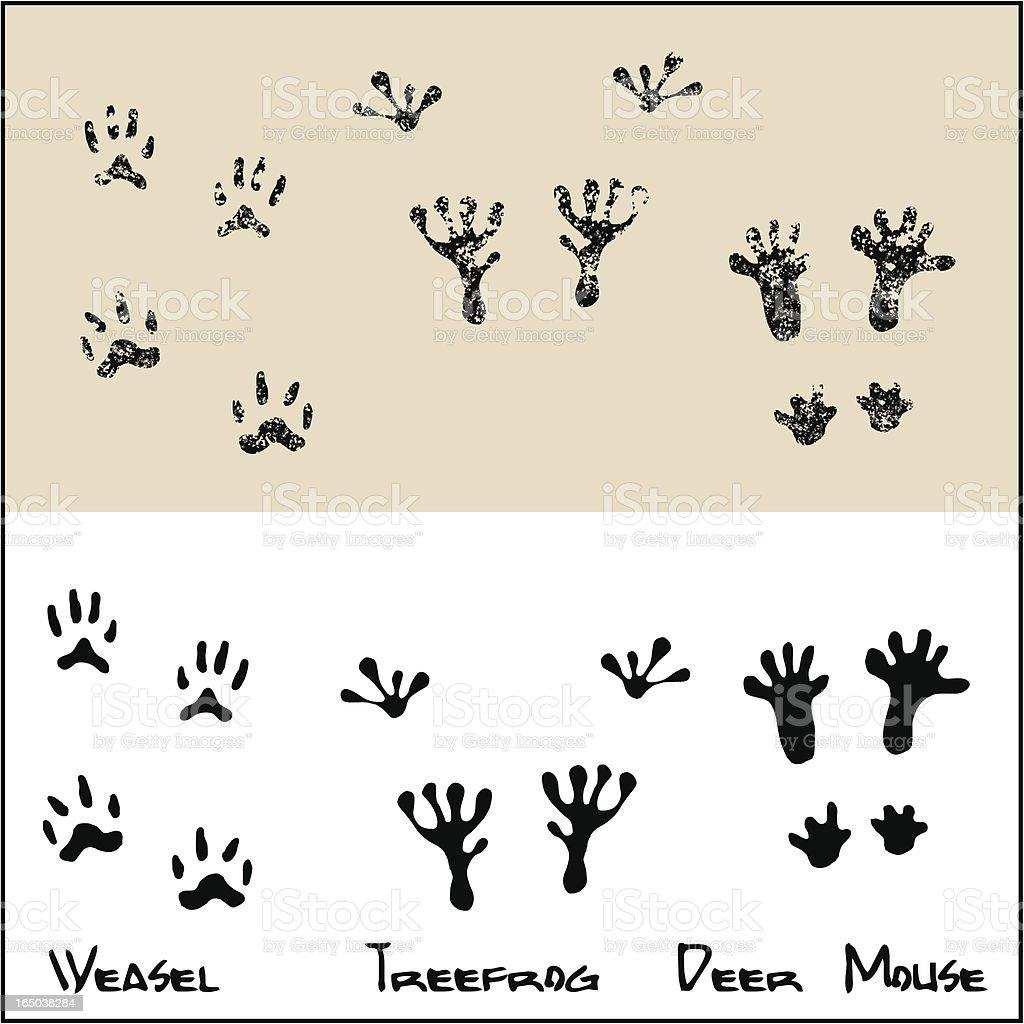 Weasel - Treefrog - Deer Mouse royalty-free stock vector art