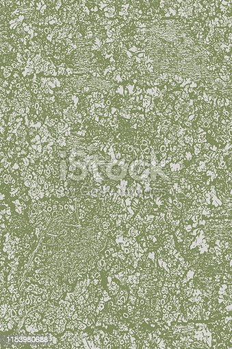 Weathered wood background with lichen moss and texture