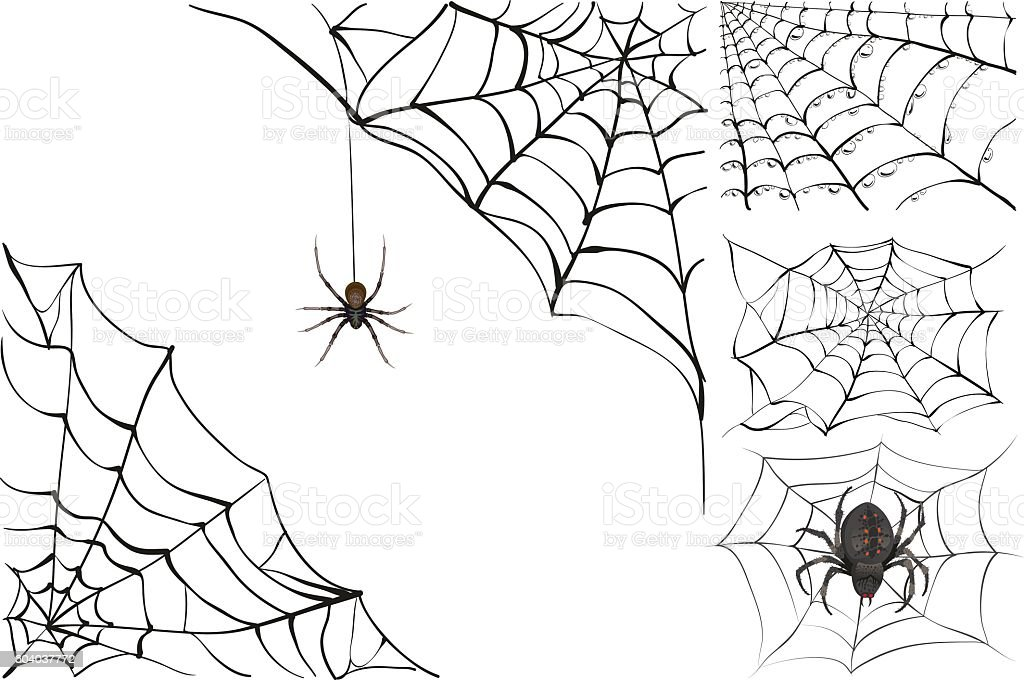 Web and black poisonous spider. Set Halloween accessory vector art illustration