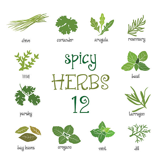 Web icon set of different spicy herbs Green web icon set of different spicy herbs basil stock illustrations