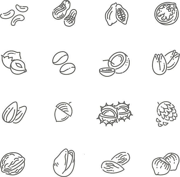 웹 아이콘 컬레션-너트, 콩 및 시드 (seed) - nuts stock illustrations
