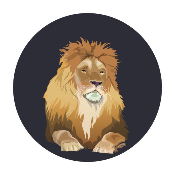 25 Lion Laying Down Drawing Illustrations Royalty Free Vector Graphics Clip Art Istock About 1% of these are stuffed & plush animal. 25 lion laying down drawing illustrations royalty free vector graphics clip art istock