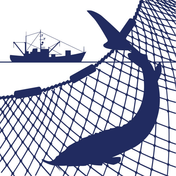 Web Silhouette of sturgeon fish on the background of the marine nets and fishing ship. Vector illustration seine river stock illustrations