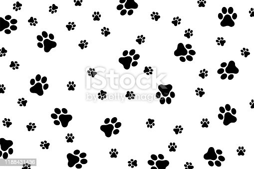 Traces of a cat or dog on a white background