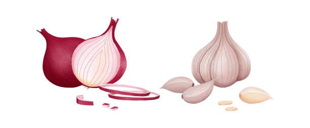illustrazioni stock, clip art, cartoni animati e icone di tendenza di web - aglio cipolla isolated