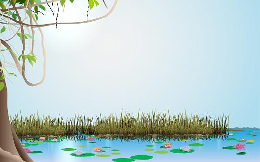 landscape of the swamp