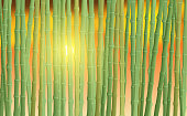 landscape of the bamboo forest in sunset