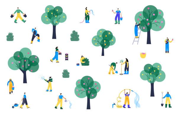 ilustrações de stock, clip art, desenhos animados e ícones de web - picking fruit