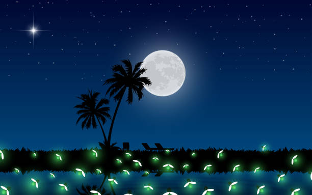 Web firefly at the swamp on mountain in the full moon night dusk stock illustrations