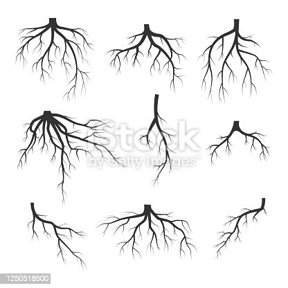 Set of black tree roots isolated on white background
