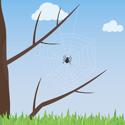 나무에 거미 웹입니다 거미는 나무에는 웹을 뽑아 0명에 대한 스톡 벡터 아트 및 기타 이미지