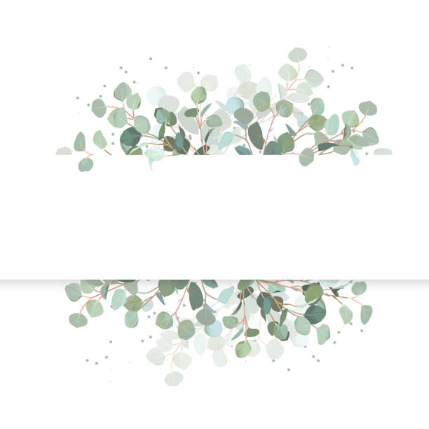 ilustraciones, imágenes clip art, dibujos animados e iconos de stock de banner en novia eucalipto vector horizontal diseño. - diseños de bodas