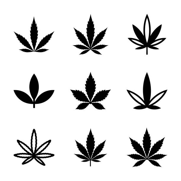 Weed and Marijuana Line and Glyph Icons Set This is amazing and outstanding pack identifying list of weed, marijuana and spot leaves line glyph icons. This set encompasses wide range of weed icons having same nature but diverse in styles and features. In this pack you can see vectors like, weed, marijuana, hemp, weed plant, and so on. Grab this pack and utilize it in related subjects. marijuana stock illustrations