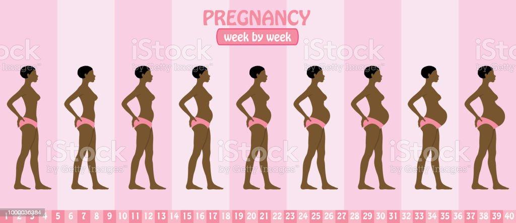 Ilustración de Semana En Etapas De Embarazo Semana De Embarazada ...