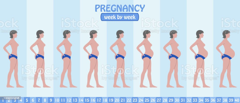 Week By Week Pregnancy Stages Of Pregnant Woman With Pants Stock ...