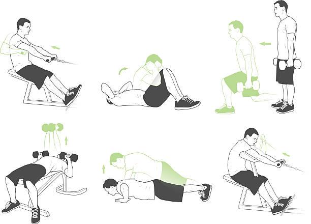 Gewichtheben und Übungen – Vektorgrafik