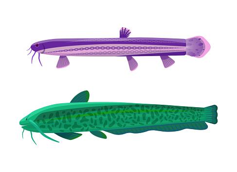 Wels Catfish Fish Types Set Vector Illustration