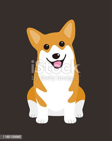 Welsh Corgi Pembroke dog are sitting waiting for taking a picture.