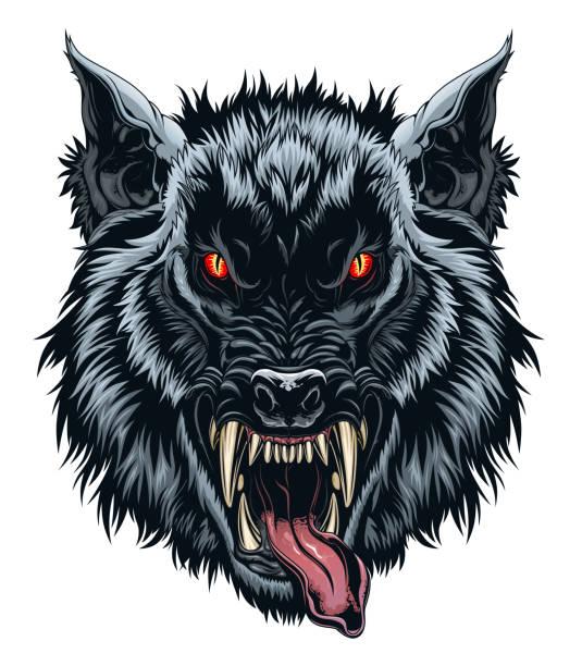 Werewolf head illustration Illustration of angry black werewolf head on the white background. werewolf stock illustrations