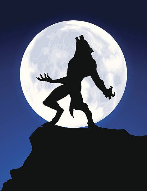 Werewolf Howl Witch on a broom, zombies corpses and more. Files included – jpg, ai (version 8 and CS3), svg, and eps (version 8) werewolf stock illustrations