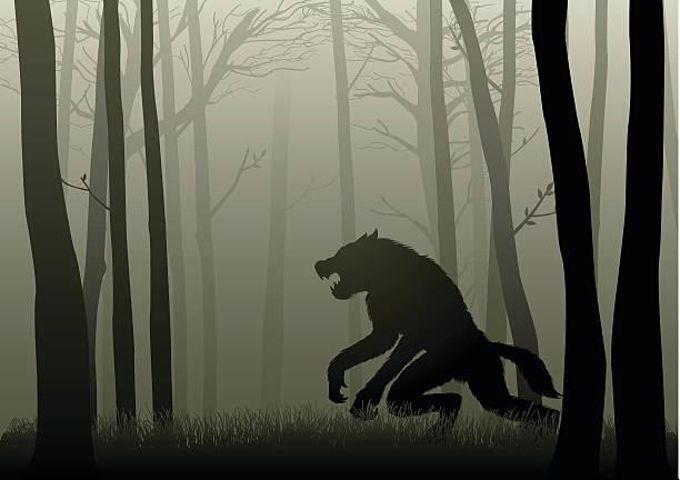 Werewolf In The Dark Woods A Werewolf lurking in the dark woods werewolf stock illustrations