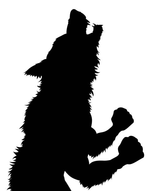Werewolf Wolfman Halloween Silhouette A werewolf or wolfman Halloween monster in silhouette werewolf stock illustrations
