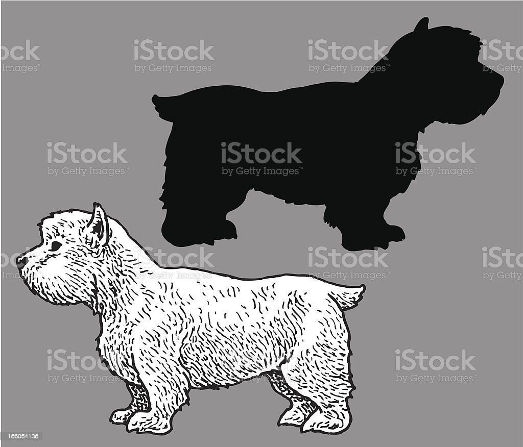 West Highland White Terrier - Dog, domestic pet royalty-free stock vector art