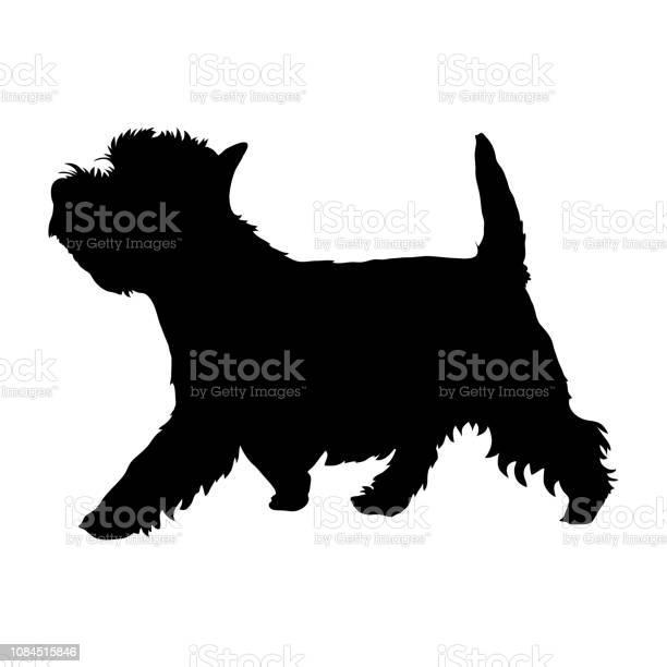West highland white terrier vector id1084515846?b=1&k=6&m=1084515846&s=612x612&h=hw5ag nixrczybjgg fsnfrirngvzjmgjyjr1olmekm=