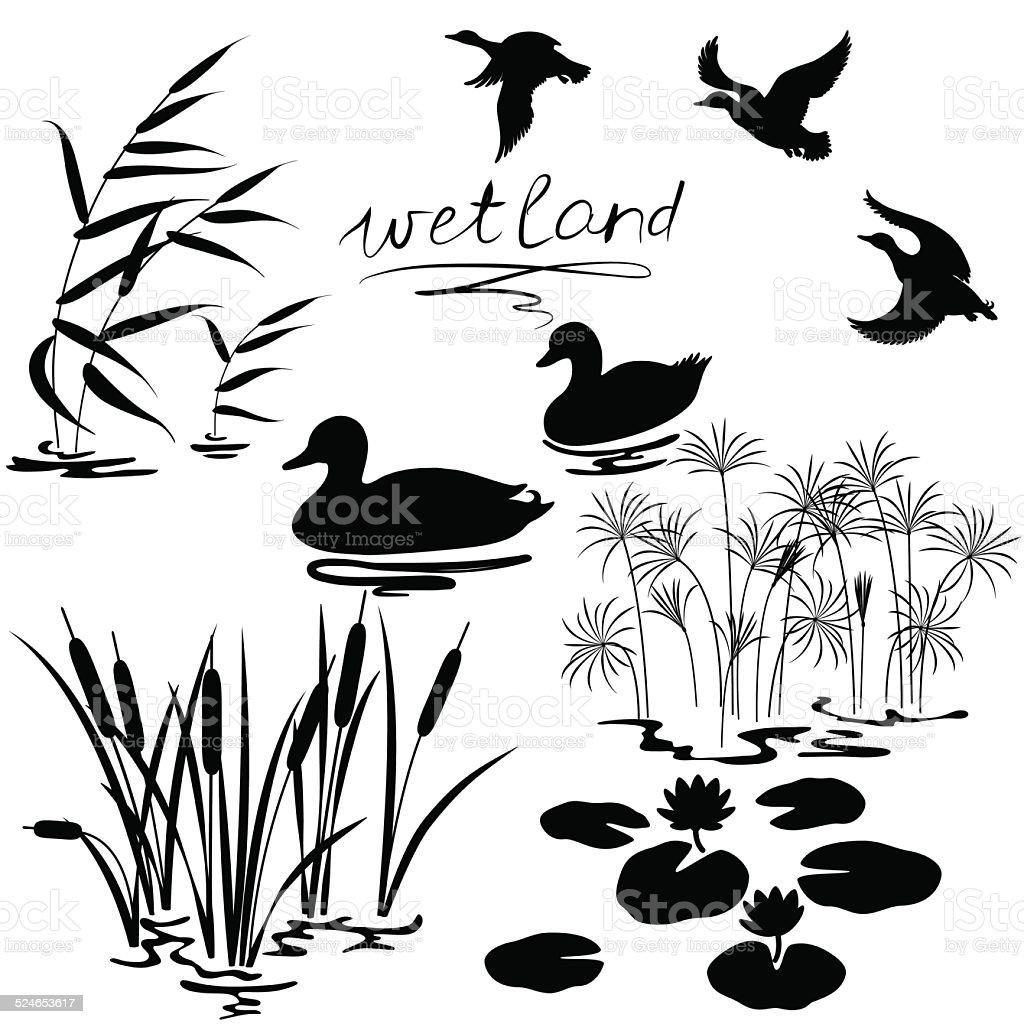 Wetland plants and birds set vector art illustration