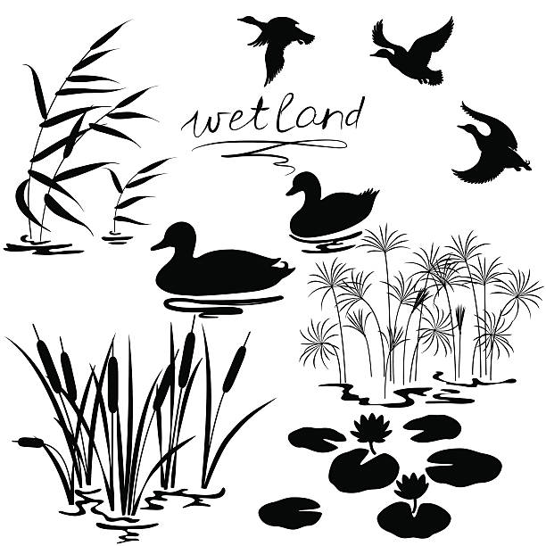 Wetland plants and birds set Set of silhouettes of water plants and ducks. drake male duck stock illustrations