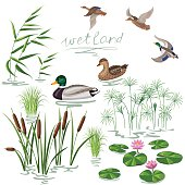 Wetland Plants and Ducks Set