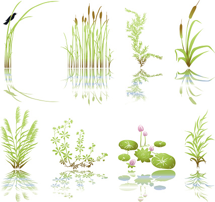 Wetlands Icons with Multiple Marsh Elements including their Shadows. The set is done in green grunge and includes, bird on thrush weed,cat tails, marsh plants and weeds, and cluster of lily pads with flowers. Each icon has it's shadow underneath.
