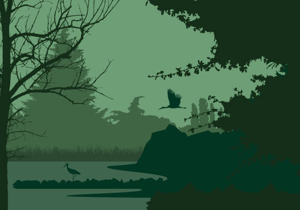 Wetlands with forest and flying and standing stork, under the evening sky - vector Wetlands with forest and flying and standing stork, under the evening sky - vector heron stock illustrations
