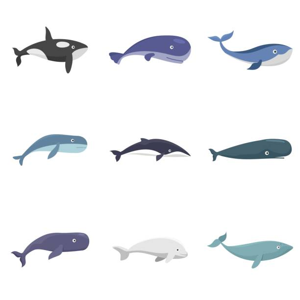 Whale blue tale fish icons set vector isolated Whale blue tale fish icons set. Flat illustration of 9 whale blue tale fish vector icons isolated on white beluga whale stock illustrations