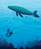 Underwater nature - silhoette of two scuba divers, coral reef and big whale with school of fishes on a blue sea. Vector ilustration. Ocean wildlife.