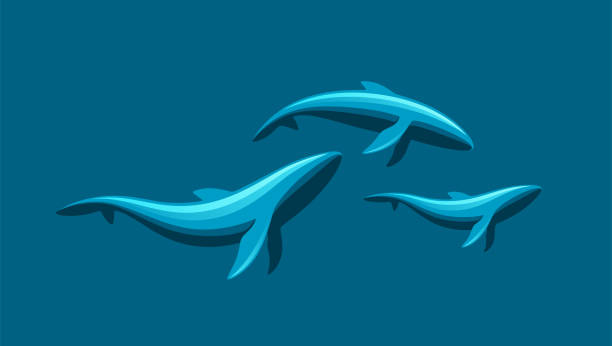 whale family - dolphin stock illustrations