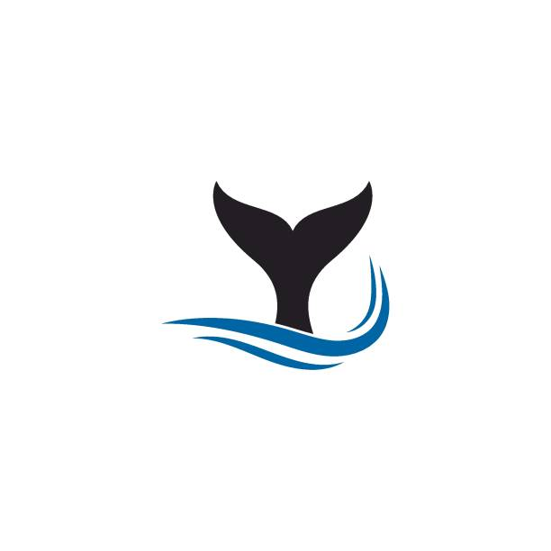 whale fin  with waves icon illustration whale fin  with waves icon illustration design killer whale stock illustrations