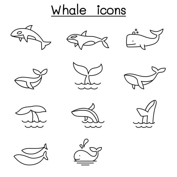 wal-ikone im stil der dünnen linie - wal stock-grafiken, -clipart, -cartoons und -symbole