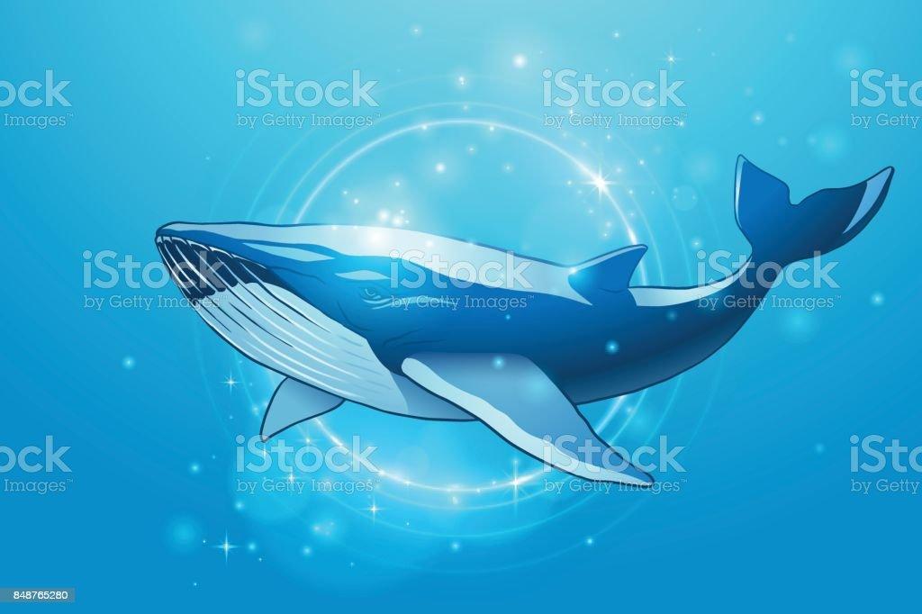 Whale-Illustrationen – Vektorgrafik