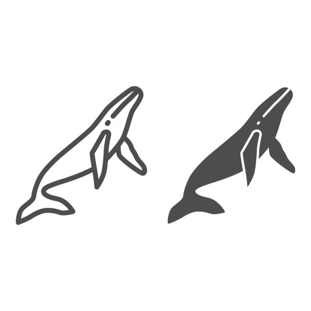 Whale line and solid icon, ocean concept, orca sign on white background, sperm whale icon in outline style for mobile concept and web design. Vector graphics. Whale line and solid icon, ocean concept, orca sign on white background, sperm whale icon in outline style for mobile concept and web design. Vector graphics giant fictional character stock illustrations