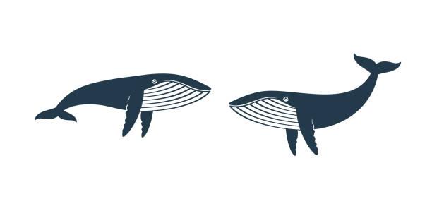 wal-logo. isolierter wal auf weißem hintergrund - wal stock-grafiken, -clipart, -cartoons und -symbole